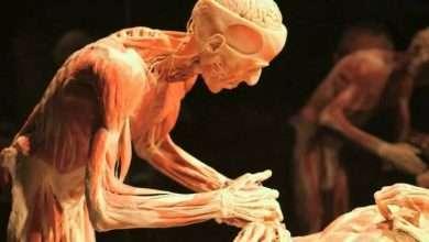Foto de Montevidéu recebe exposição de múmias