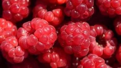 Foto de Saudável e saboroso Detox de Cacau com Frutas Vermelhas