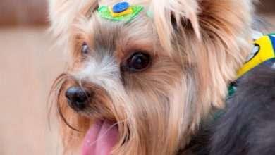 Foto de Torcida pelo Brasil inclui também bichinhos de estimação na festa