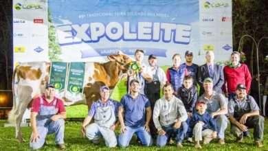 Foto de Expoleite é Vitrine da Raça Holandesa com Cerca de 300 Animais em Exposição