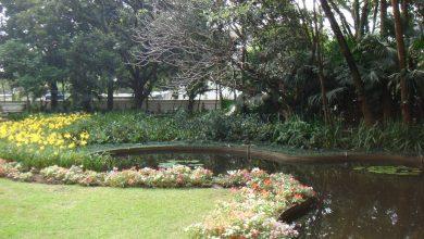 Foto de Casa-Museu Ema Klabin e MuBE celebram paisagista Burle Marx
