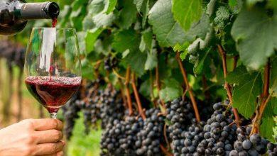 Foto de Pró-Vinho fomenta o consumo de vinho no Brasil com promoções