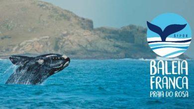 Foto de Grupo Baleia Franca Praia do Rosa comemora a chegada das baleias em Santa Catarina e abre temporada 2019