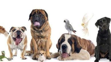 Foto de Quem fica com o animal de estimação no divórcio?