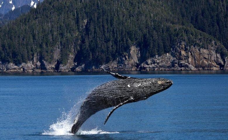 Liberado o turismo embarcado para observação das gigantes do mar