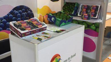 Foto de Termotécnica reforça presença da marca DaColheita em eventos internacionais