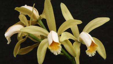 Foto de Como manter sua orquídea bonita, saudável e com vida longa?