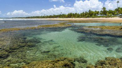 Foto de Bahia é o Estado mais buscado para turismo.