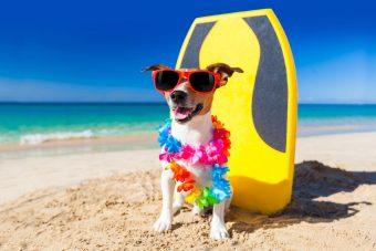 Verão exige cuidados redobrados com os pets