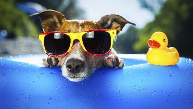Foto de Verão exige cuidados redobrados com os amigos pets