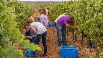 Foto de Vinhos do Alentejo estão entre os melhores do mundo