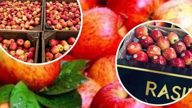 Foto de Versatilidade da maçã o ingrediente que é coringa na cozinha