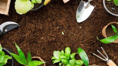 Foto de Horta medicinal podem tornar sua vida mais saudável