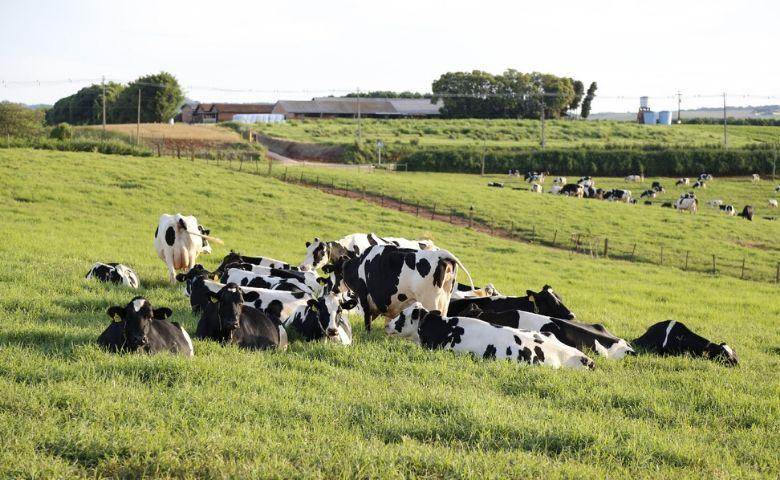 Sistema de monitoramento fazenda leiteira melhora gestão