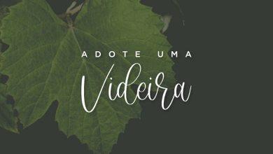 Foto de Vinícola Legado lança programa Adote uma Videira