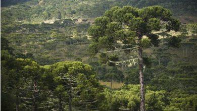 Foto de Chubb faz doação focada na proteção de florestas tropicais