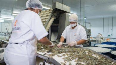 Foto de Brasil volta a exportar camarão após 15 anos