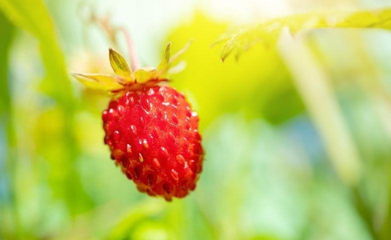 Biotrop apresenta soluções para o manejo natural dos sistemas agrícolas
