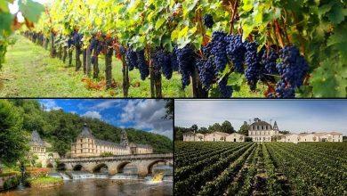 Foto de Paisagens das vinícolas na região de Bordeaux na França