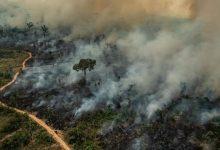 Foto de Desmatamento desenfreado é uma verdadeira ameaça