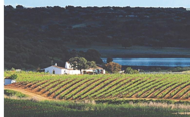 Vinhos portugueses do Alentejo para provar no Brasil