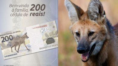 Foto de A nova nota leva a atenção na preservação do lobo-guará
