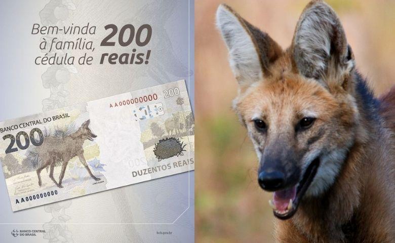 A nova nota leva a atenção na preservação do lobo-guará