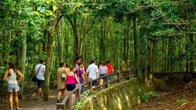 Foto de Seleção de 150 guias de turismo para Foz do Iguassu